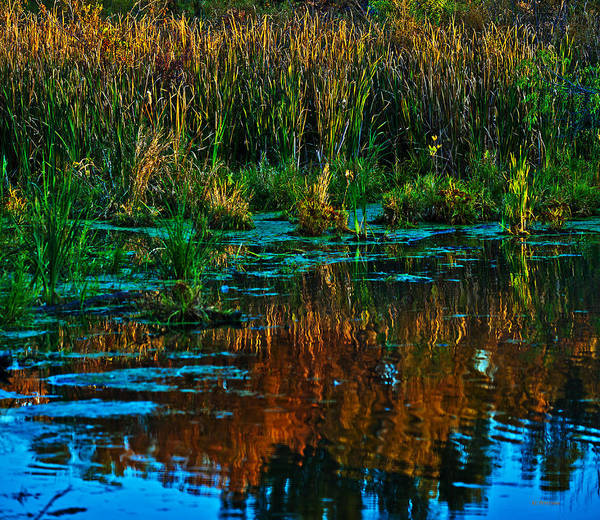 Photograph - Fall Reflection by Edward Peterson