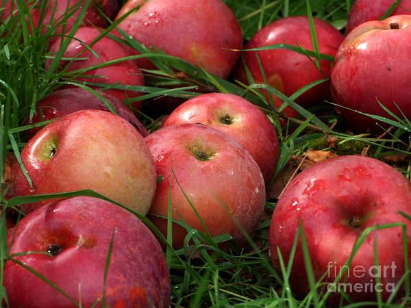 Photograph - Fallen Apples Photograph by Kristen Fox
