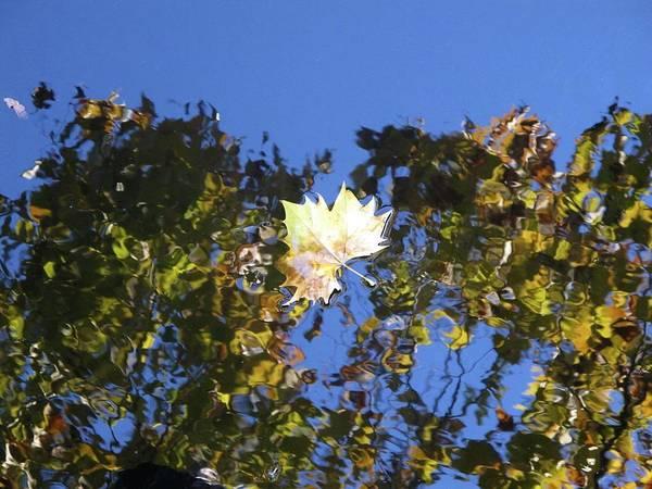 Photograph - Fallen Leaf by Ralph Jones