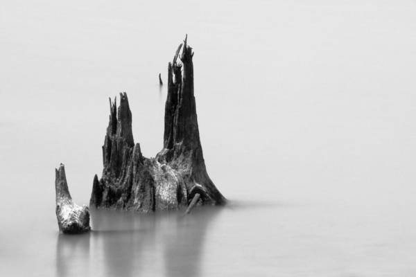 Photograph - Fallen by Ryan Heffron