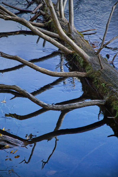 Manistee River Wall Art - Photograph - Fallen Tree Trunk In The Little Manistee River by Randall Nyhof
