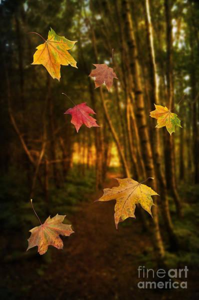 Fallen Leaves Photograph - Falling Leaves by Amanda Elwell