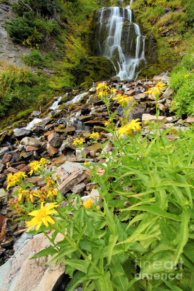 Wall Art - Photograph - Falls To The Flowers by Adam Jewell