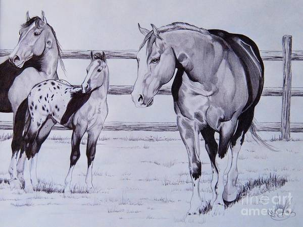 Appaloosa Drawing - Family by Cheryl Poland