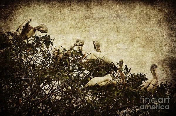 White Pelican Photograph - Family Tree by Andrew Paranavitana