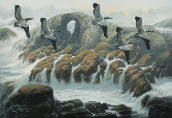 Farallon Islands Painting - Farallon Pelicans by Marte Thompson