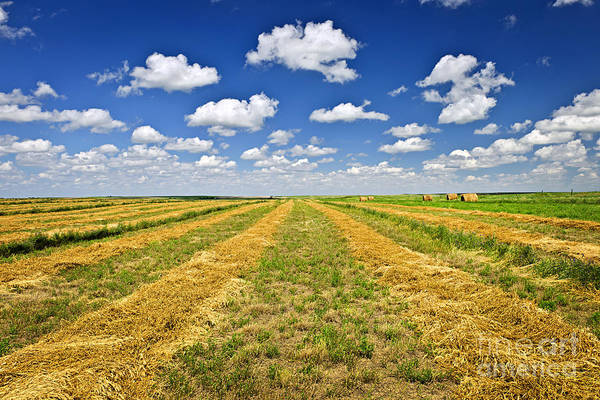 Wall Art - Photograph - Farm Field At Harvest In Saskatchewan by Elena Elisseeva