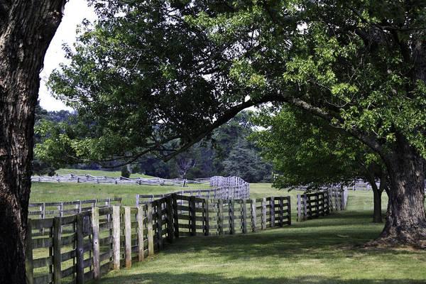 Between The Trees Photograph - Farmland Shade Appomattox Virginia by Teresa Mucha