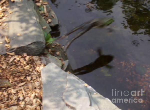 Photograph - Faster Than A Jumping Frog by David Karasow