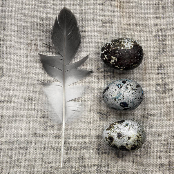 Wall Art - Photograph - Feather And Three Eggs by Carol Leigh