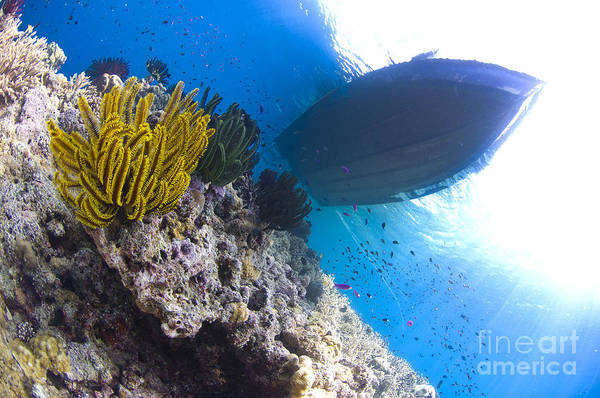 Photograph - Feather Stars With A Boat by Steve Jones