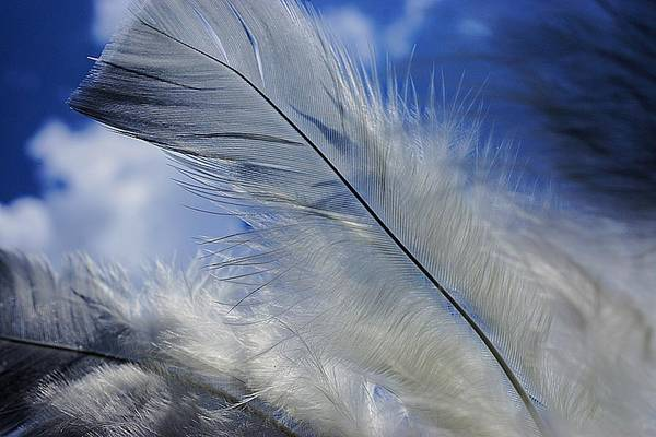 Photograph - Feathers Against The Clouds by Beth Akerman