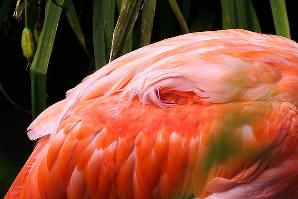 Photograph - Feathers by Trish Tritz