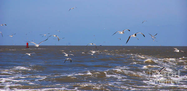 Photograph - Feed Us - Ferry To Galveston Tx by Susanne Van Hulst