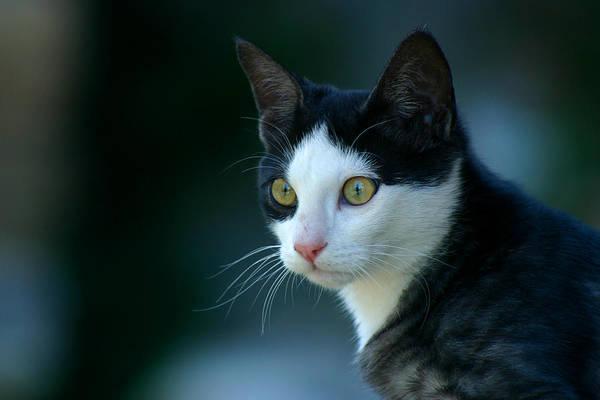 Photograph - Feline by Emanuel Tanjala