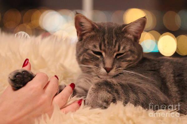 Photograph - Feline Friendship by Donna L Munro