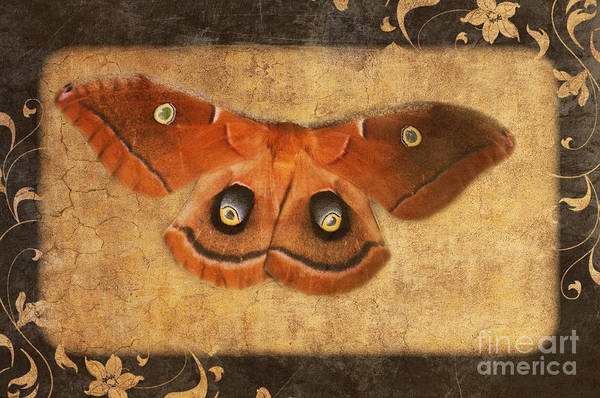 Photograph - Female Moth by Andee Design
