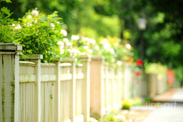 Picket Fence Photograph - Fence And Flowers by HD Connelly