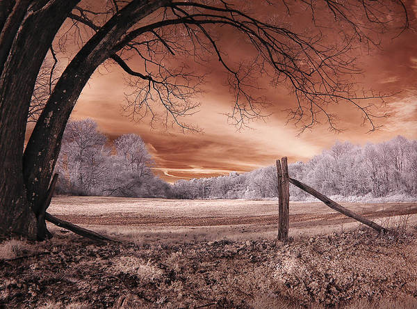 Photograph - Fence And Old Tree by Steve Zimic