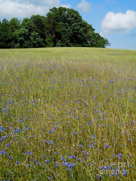 Wall Art - Photograph - Field Of Blue by Pauline Ross