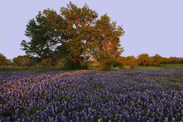 Field Of Blue Art Print