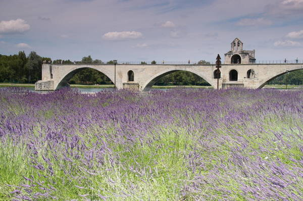 Rhone River Photograph - Field Of Lavenders And St. Benezet's Bridge by by Johan Krijgsman, the Netherlands