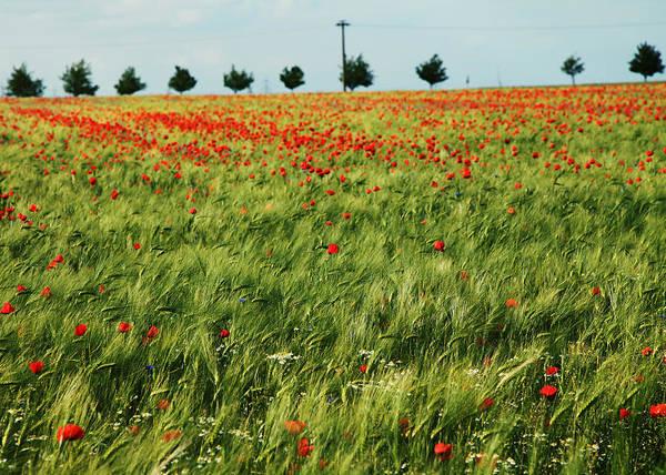 Felder Wall Art - Photograph - Field Of Poppies 2 by Falko Follert