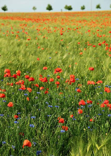 Felder Wall Art - Photograph - Field Of Poppies by Falko Follert