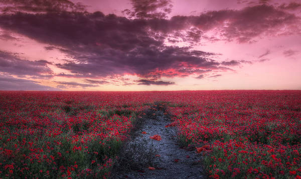 Wall Art - Photograph - Field Of Poppies by Lee-Anne Rafferty-Evans
