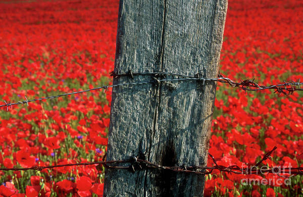 Fence Post Photograph - Field Of Poppies With A Wooden Post. by Bernard Jaubert
