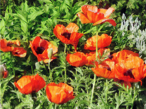 Photograph - Field Of Red Poppies by Susan Savad