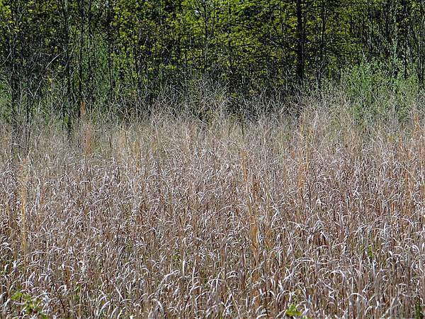Photograph - Field To Forest by Beth Akerman