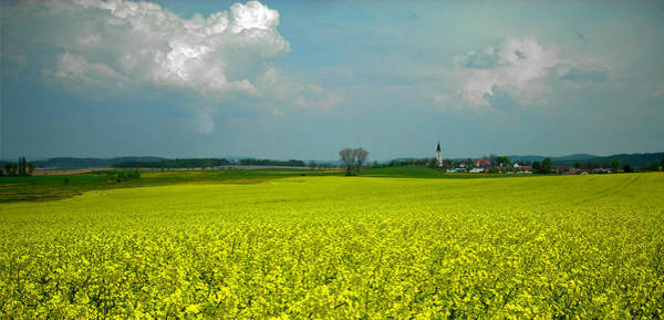 Feld Wall Art - Photograph - Fields Of Gold ... by Juergen Weiss