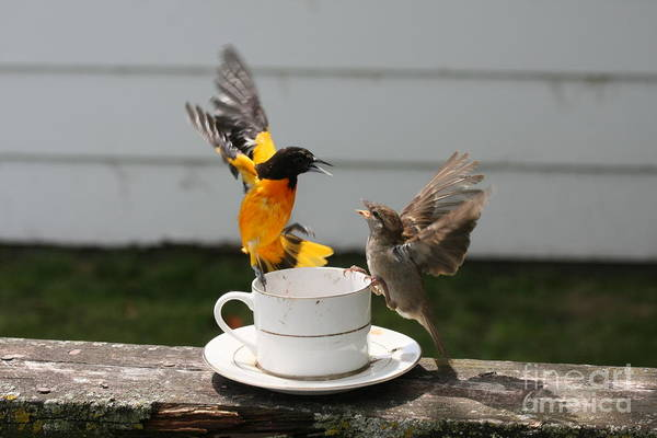 Wall Art - Photograph - Fight For The Tea Cup by Lori Tordsen
