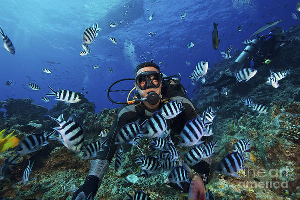 Pomacentridae Photograph - Fijian Dive Guide Feeds A School by Terry Moore