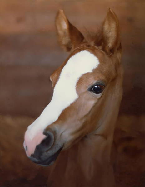 Foal Photograph - Filly by Angie Vogel