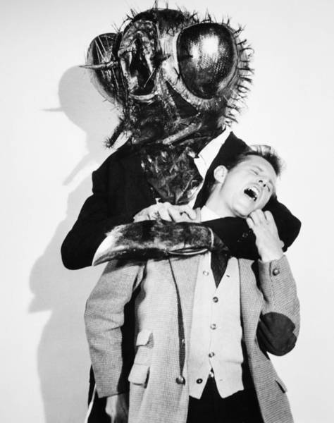 Photograph - Film: The Fly, 1958 by Granger