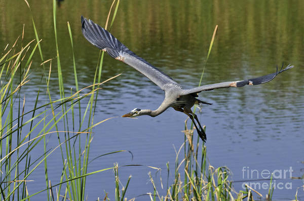 Photograph - Final Approach by David Waldrop