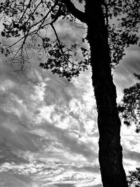 Photograph - Fir Tree And Clouds by Beth Akerman