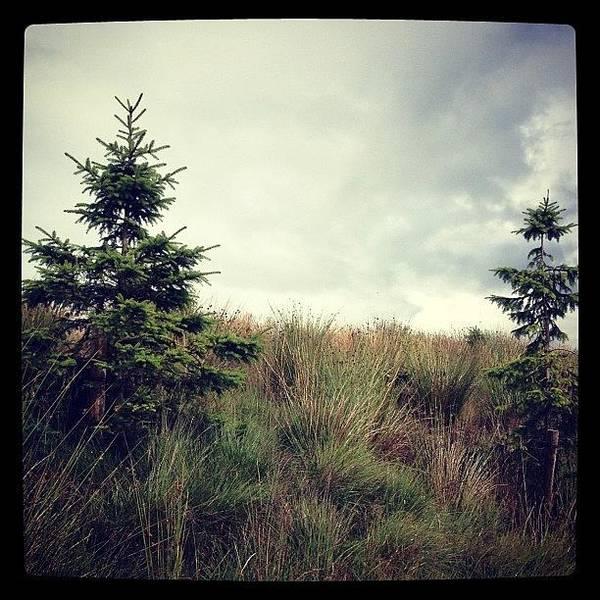 Grace Wall Art - Photograph - #fir #trees #firtrees #green #plants by Grace Shine