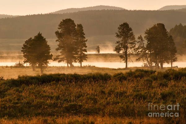 Photograph - First Light -- Hayden Valley by Charles Kozierok