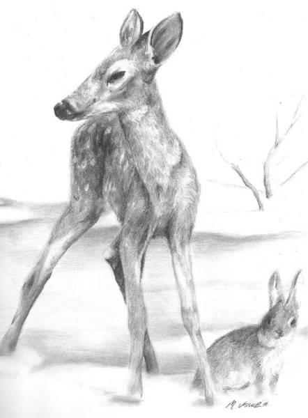 White Tailed Deer Drawing - First Snow by Meagan  Visser