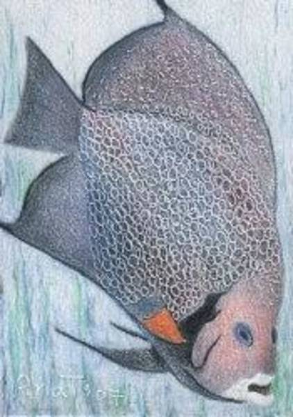 Drawing - Fish - Aceo by Ana Tirolese