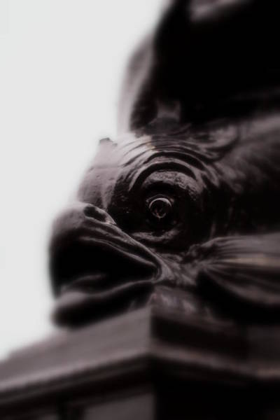Photograph - Fish Eye by Jacqui Collett