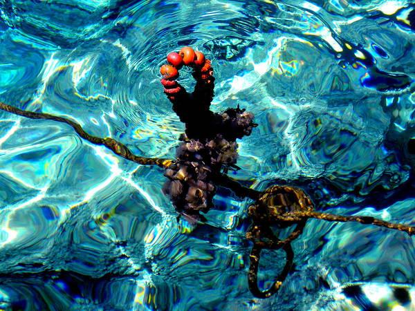 Photograph - Fish Knot Santorini Greece by Colette V Hera  Guggenheim