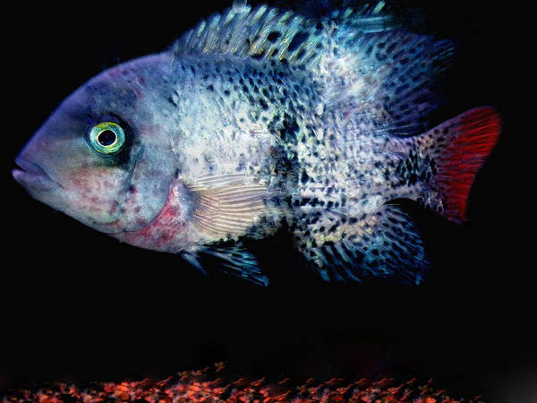 Photograph - Fish Swim Joy  In Denmark by Colette V Hera  Guggenheim
