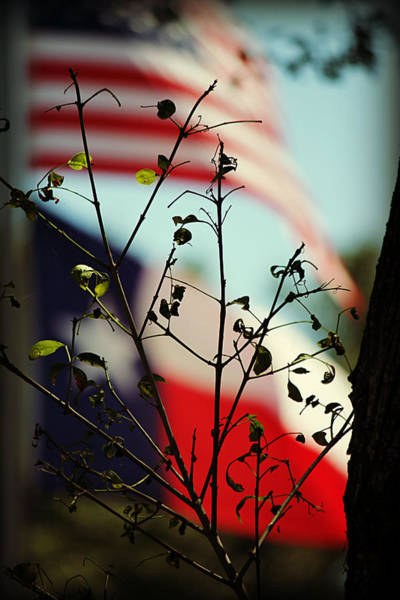 Photograph - Flags Of The Usa And Texas Behind Spring Leaf Buds by Sarah Broadmeadow-Thomas