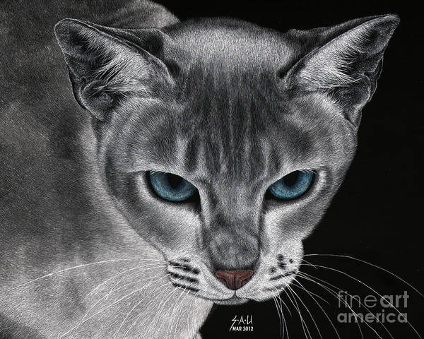 Scratchboard Drawing - Flame Point Siemese Cat by Sheryl Unwin