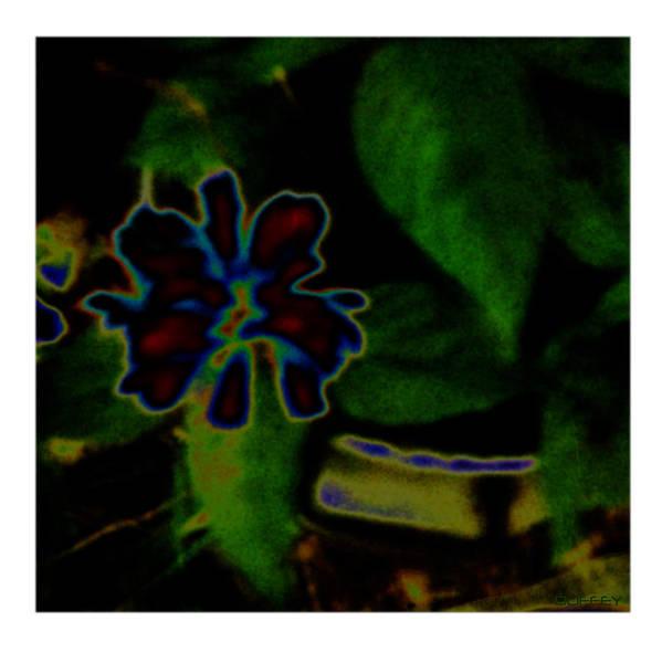 Photograph - Fleur Bleu Deux by Doug Duffey