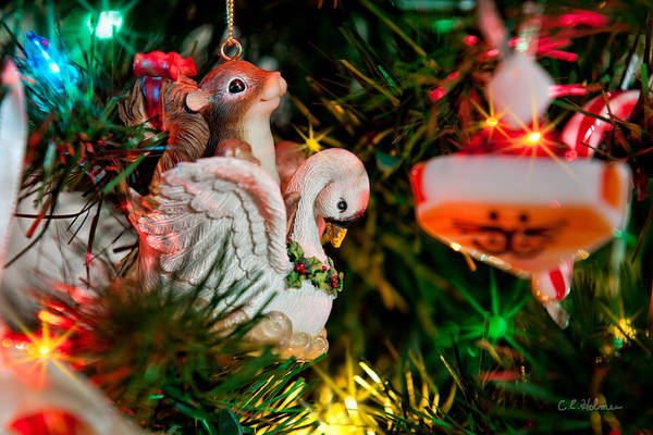 Photograph - Flight Of Christmas Fancy by Christopher Holmes